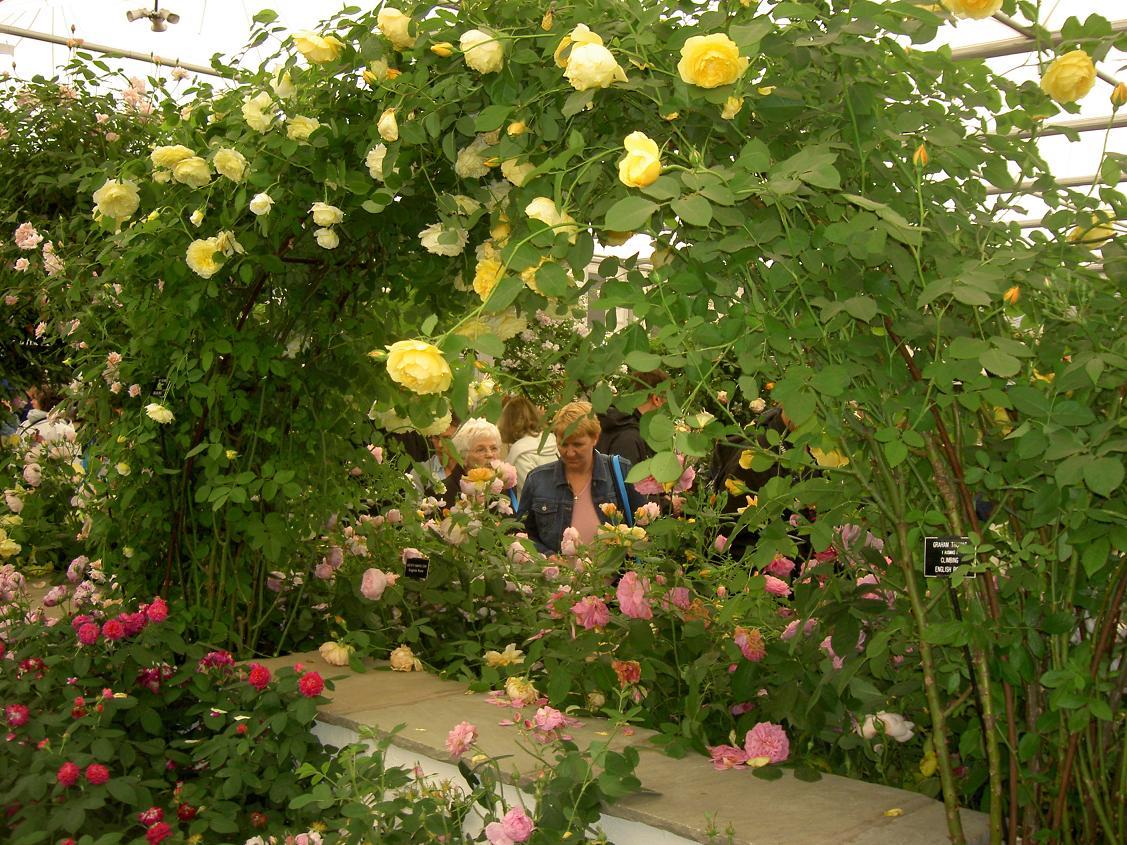 Trender i trädgård   trädgårdsevenemang   trädgård ifokus
